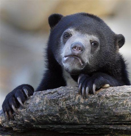 Confession-Bear.jpg